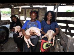 Female pig farmers (from left) Diana Daley-Downer, Coleen McLeod and Stacey-Ann Samuels.